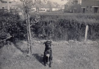 1961 My dog Rex in front garden by the Hawthorn sapling - Small white bungalow near where the orchard use to be is on the right at junction with Tattenham Road. Now occupied by Flats | Patsy Mott (née Tyler)