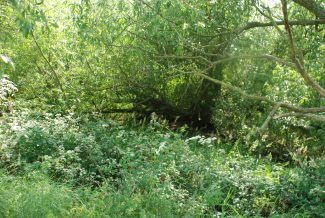 If you look carefully you can just see the bed of the pond among the foliage | Ian Mott 14 June 2011
