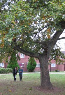 Nina, Deanna and the Oak Tree Oct 2009 | Colin Humphrey