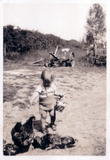 Grandson Jimmy Richards feeding chickens, farm machinery in back ground and Pendennis in the distance. | Denise Hamilton