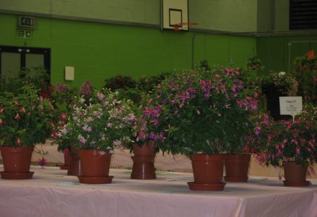 2011 Fuchsia Show