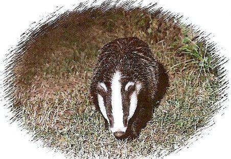 Langdon Badgers