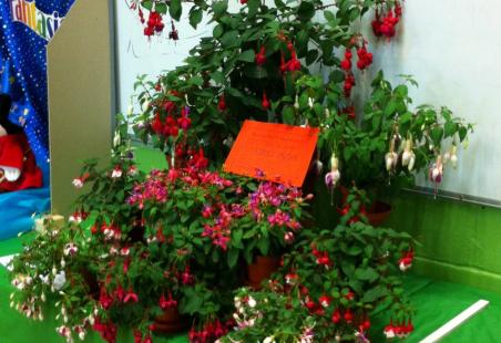 2012 Fuchsia Show