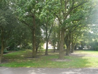 The line of trees that once formed the boundary between plotland gardens | Ken Porter