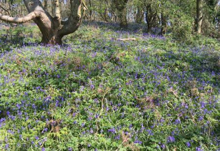 Bluebell time and memories