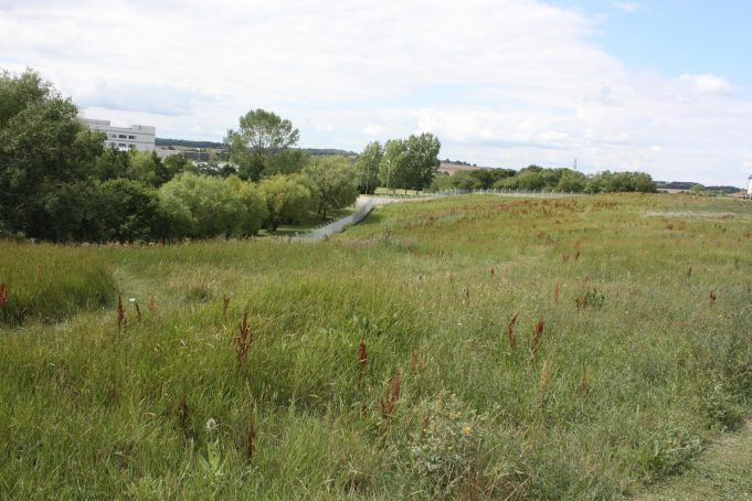 The wildlife corridor created between Dunton Fields Estate and Ford's Research Centre.
